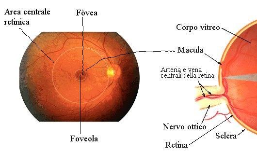 Noi tehnologii moderne pentru bolile oftalmice